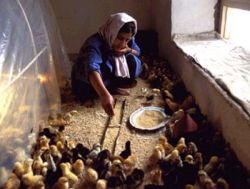 Picture of a poultry farmer