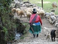 Picture of a shephard in Peru